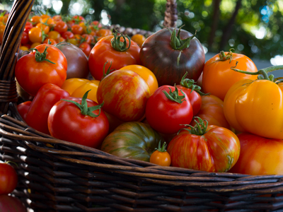 A basket of red, orange, yellow and green tomatoes.
