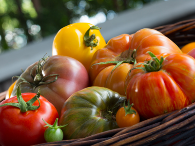A basket of red, orange, yellow, and green tomatoes.